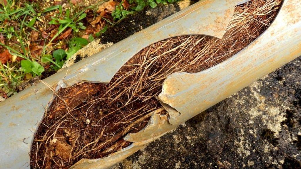 adeedo-tree-roots-plumbing